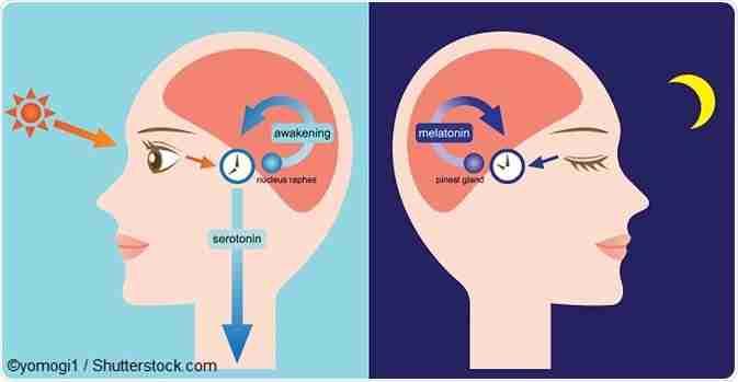 Etichetă: ritm circadian
